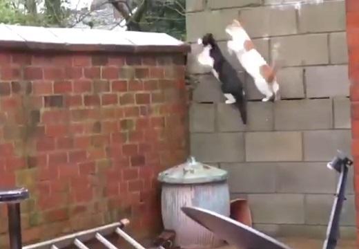 【w】息がぴったりすぎて二人羽織になっちゃった猫達が話題
