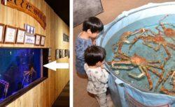 【w】水槽のクーラー故障!緊急で配置交換した水族館が話題「カニ直売所みたいw」