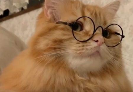 【知的】めがねが似合いすぎるイケメン猫さんが話題「眼鏡CM出て欲しいw」