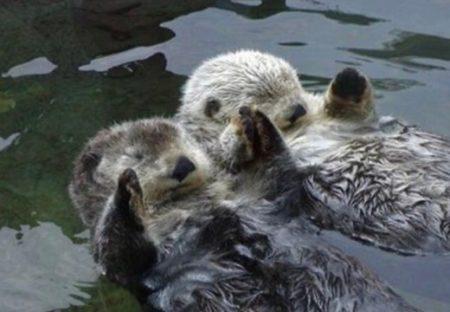 【はぐれないよう手を繋いで眠る】「ラッコが可愛い理由4つ」が話題