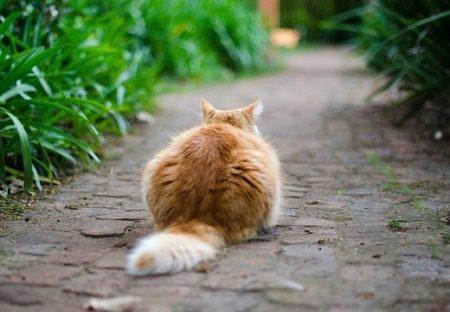 【ねこ知識】猫が気に入ってる人におしりを見せてくる理由が話題w