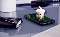【朗報】かわいい動物の動画がストレス・不安の軽減になる可能性。英大学の研究で実証