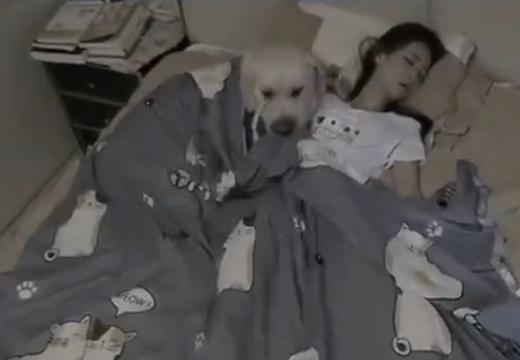 【けなげ】隣で眠る主さんの布団を直すわんちゃん。かけた後の様子が可愛いすぎ!