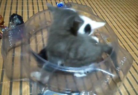 【w】物凄くカワイイ子猫の取っ組み合いが話題(・∀・)