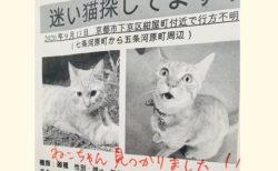 【感動】迷子だった1才のネコ、無事発見される