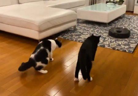 【爆笑w】藤あや子さんちの保護猫たち、お掃除ロボと初対面の様子が可愛いすぎるw