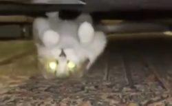 【w】逆さまで迫り来る猫!の動画が話題「妖怪w」「予想外すぎる」