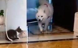 【動画】驚かせようとする猫と、犬の反応 どっちもめっちゃ可愛いw
