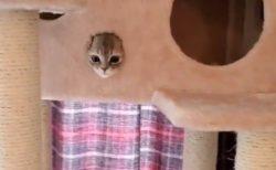 【動画】掃除機と初遭遇した時の子猫の様子がめちゃくちゃカワイイw