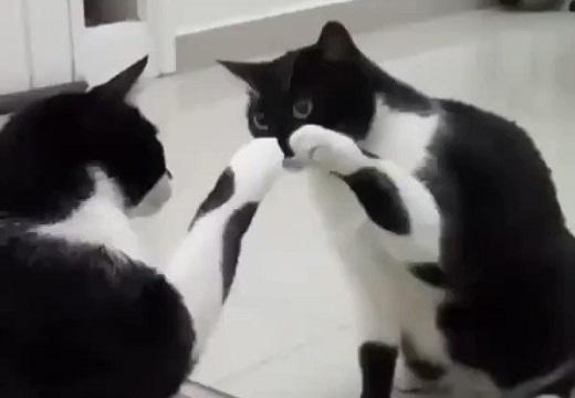 【閲覧注意】鏡が気になるかわいい猫‥衝撃のラストにネット騒然