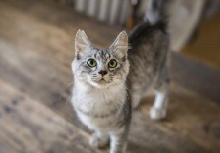 【可愛いかよ】「猫が何度もごはんをねだる理由」獣医さんによる意外すぎる説明が話題