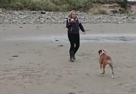【w】ボールキャッチ失敗し盛大に転びごまかす犬が話題「可愛いすぎる」