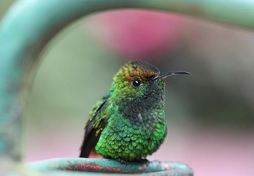 世界最小の鳥、ハチドリが子育てしている場面。貴重な動画が話題、めちゃ可愛い!