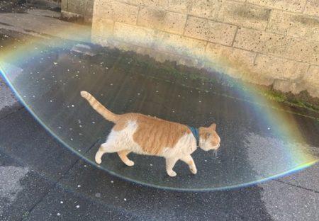 【かっこいい】シールドを張ったような猫が目撃される!