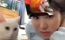 【動画】主さんのおでこに猫が出現し、ブチギレる猫ちゃんが話題w