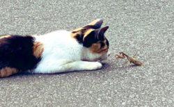 【w】猫とカマキリ、正々堂々一騎打ちの場面が話題(・∀・)