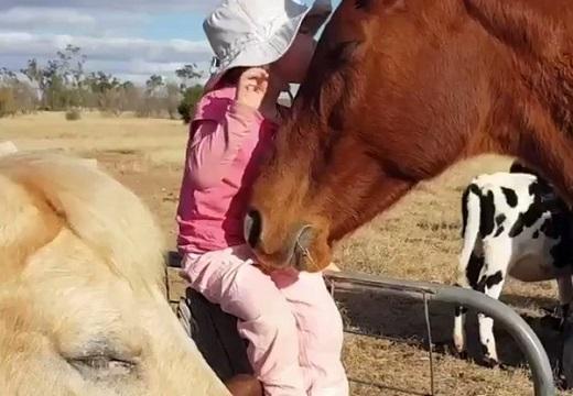 【天使】女の子が馬達を寝かしつけする動画が話題「幸せそう・・」