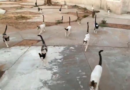 【しっぽ乱立】みんなでお出かけする猫集団が可愛いw