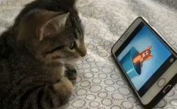 【動画】トムとジェリーを真剣に視聴する子猫が可愛いすぎるw