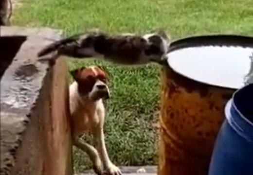 【w】すごい格好で水を飲む猫と、見ている犬が話題「犬が(笑」