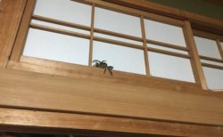 【!】頭上からカサカサ音が・・恐る恐るじっくり見るとカワイイ子を発見!
