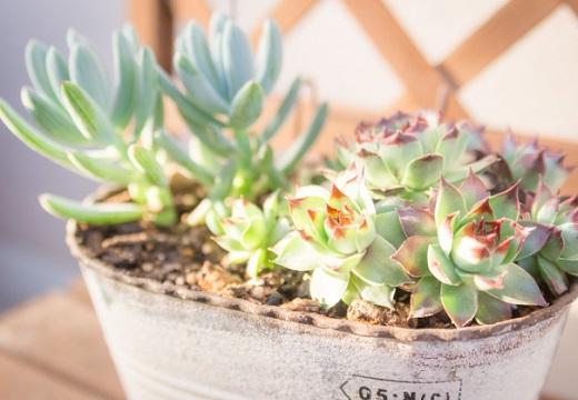 【w】「水やりもして可愛がってた植物が造花だった・・悲しい」似た体験談が続々