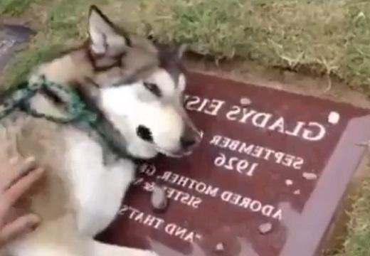 【泣】飼い主のお墓で悲しむ犬の様子が話題「泣いてるの?!」「わかるんだ‥」