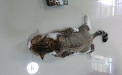 【ぐてーー】冷たい床を堪能する猫ちゃんが可愛いw