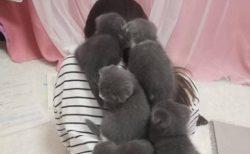 【子猫まみれ】背中いっぱいに乗っかってる子猫集団!羨ましすぎるー!!