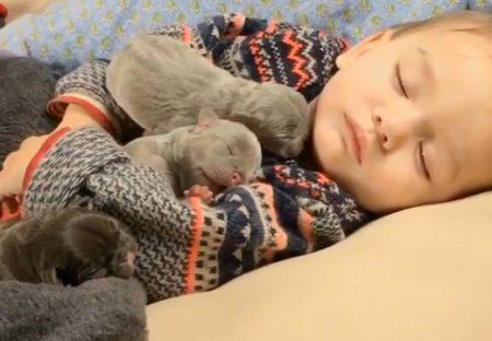 【動画】眠る赤ちゃんの腕の中で眠る子犬たち‥最強に可愛い!