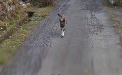 【w】Googleマップで撮影車をめちゃ追いかけてくる犬が話題に(・∀・)