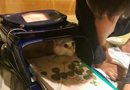【表情w】ランドセルにすっぽり入って出てこない猫ちゃんが可愛い(・∀・)