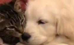 【動画】仲良しな犬と猫が話題「ずっと見てる」「うわぁ・・」