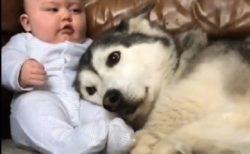 【生後1日めから】赤ちゃんと大きな犬の成長記録、愛らしい動画が話題に