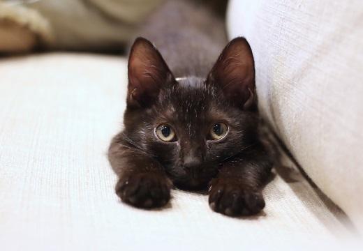 【!?】自分の足が4本あることに気づいた子猫の反応が可愛いw