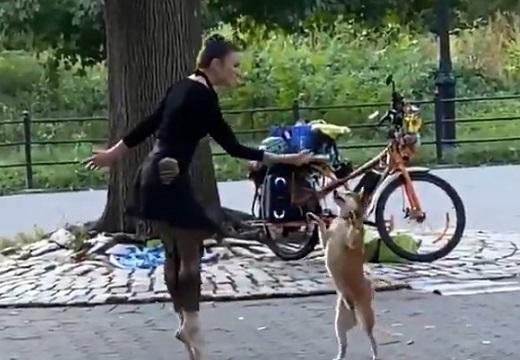 【動画】NYで目撃された美女と柴犬のダンスがステキすぎる
