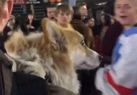 【動画】おんぶされて電車に乗る犬、たくさんの人を笑顔にする(・∀・)