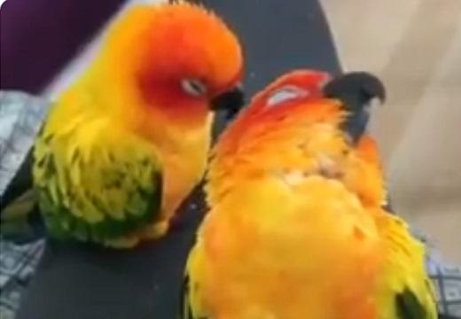 【zzz】鳥が寝落ちする瞬間が話題「こけたw」「巻き添え!」