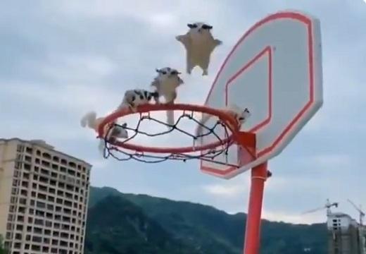 【w】連続写真みたいに次々ジャンプしてくる5匹のモモンガが話題