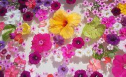 【話題】蜷川実花展に感化されたお父さん(72)、庭にすごい作品を作ってしまう・・
