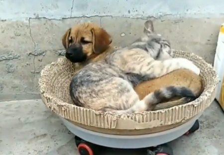 【動画】ぴったりくっついて眠る犬と猫、見てるだけで和むと話題