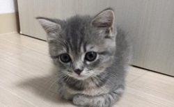【貫録w】この可愛い子猫の1年後・・・