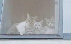 【w】視線を感じると思ったら2階の窓から猫集団が・・・