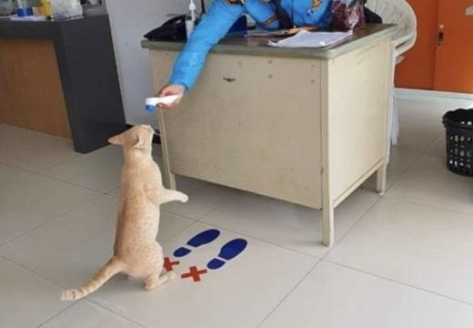 【ピッ】体温チェックを受ける猫が話題「おでこ出してるw」