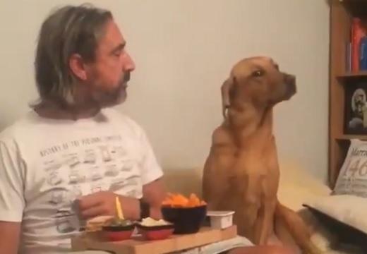 【動画】主さんのごはんが気になって仕方ない犬、目をそらす様子が可愛いw