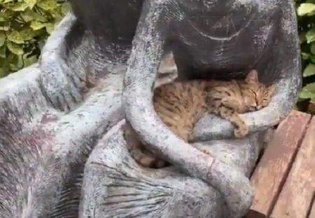 【w】銅像に抱っこされてウトウト眠る猫が話題「かわいい~」「抱っこしてあげたい」