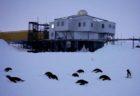 【南極】昭和基地の前で眠る12羽のペンギンが話題「まるまるしてるw」