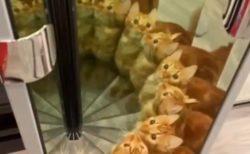 【動画】鏡で遊ぶ猫ちゃんが話題「びっくりした」「万華鏡ねこw」