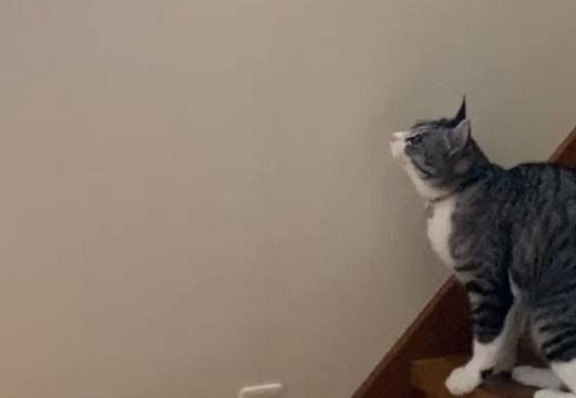 【w】壁の虫が気になる猫ちゃん。狙いを定めてる間に・・・