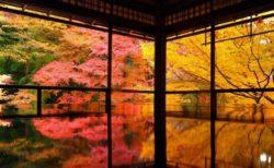 【日本語】心震える程美しい日本の秋言葉5つが話題「知らなかった」
